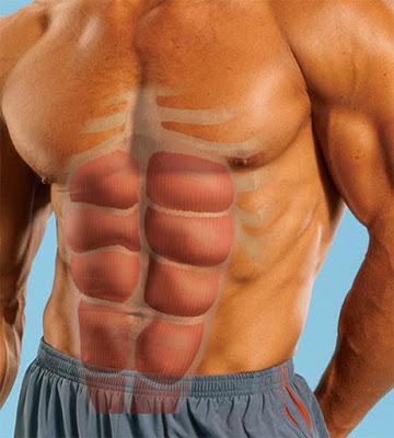 Cơ bụng thẳng (cơ 6 múi)