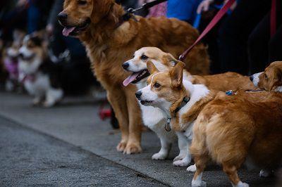 Đi dạo cùng thú cưng là một biện pháp giảm mỡ thừa thú vị