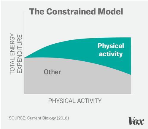 Tập thể dục không giúp giảm cân như bạn nghĩ