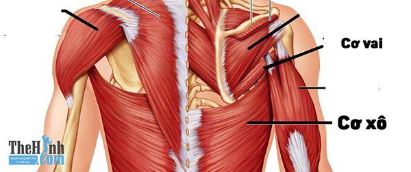 Sử dụng cơ vai và xô khi tập lưng