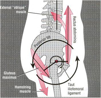 Hông bình thường và lưng thẳng