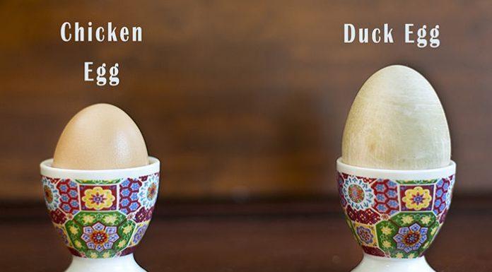 Tập Gym nên ăn trứng gà hay trứng Vịt