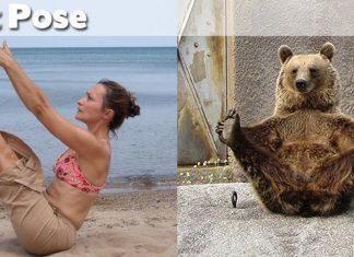 Ảnh động vật tập Yoga hài hước