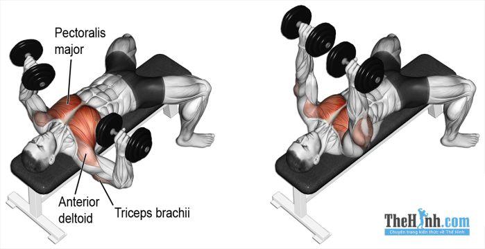 Dumbbell Bench Press - Bài tập ngực tốt nhất dành cho gymer