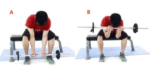 Seated Narrow Barbell Curl