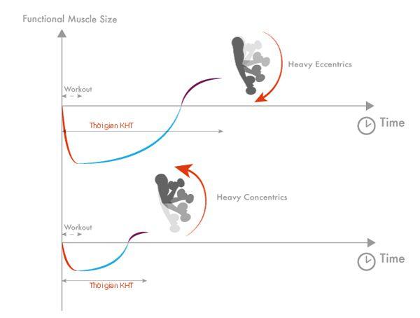 Cơ bắp tại điểm dãn nhất (eccentric – giai đoạn thả của bài tập)