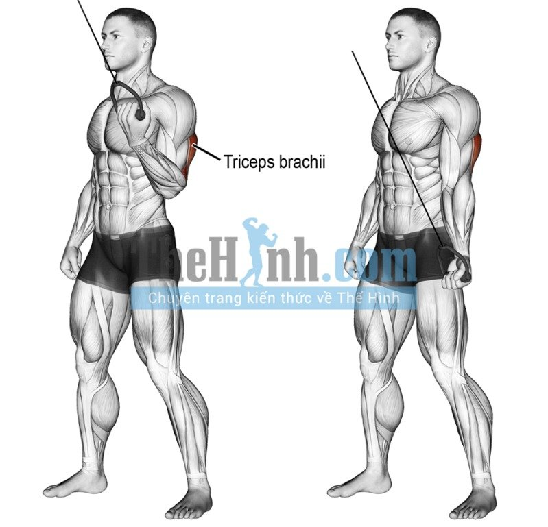 Cable one arm reverse grip triceps pushdown