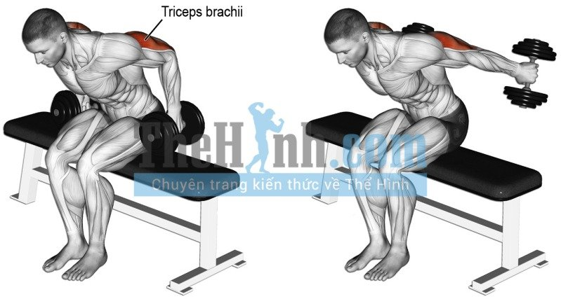 Seated bent over two arm dumbbell kickback