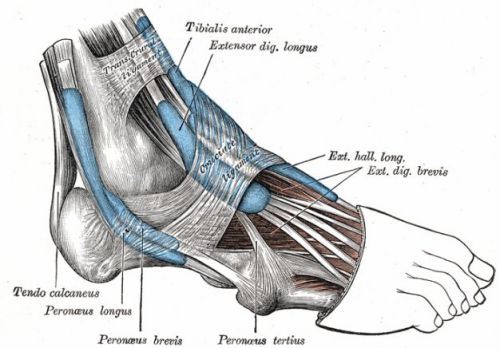 9 chấn thương nghiêm trọng trong luyện tập nếu chạy bộ quá sức