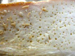 Top 10 loại thực phẩm nguy hiểm nhất thế giới mà hầu như ai cũng đã ăn – P2