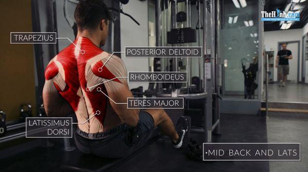 Seated Cable Rowsn - Bài tập lưng xô hiệu quả nhất cho nam