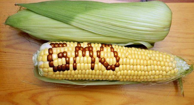 Thực phẩm biến đổi gen là gì ? Lợi và hại cùng cách nhận biết ra sao ?