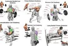[Free] Bộ ảnh tập gym kèm vị trí nhóm cơ trong thể hình khi tập