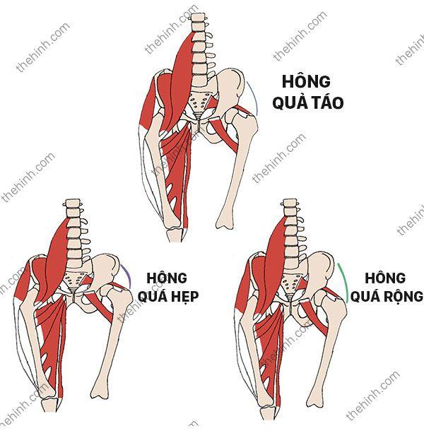 Cấu tạo phần hông