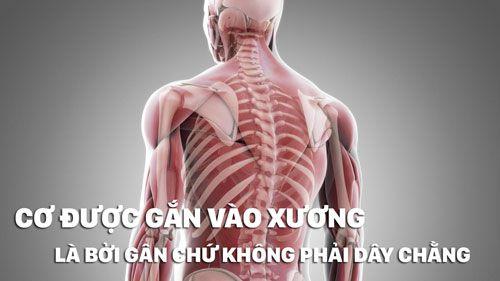 Fun Fact | 14 bí mật của cơ bắp có thể bạn chưa bao giờ biết