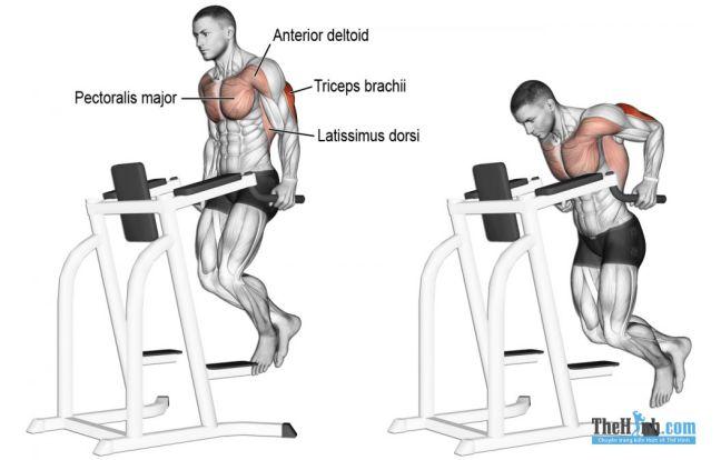 Triceps Dip - Hướng dẫn tập tay sau trên xà kép