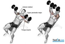 Dumbbell Incline Press Muscle Worked