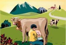 Uống sữa bò có tốt không, những tác hại của sữa bò mà bạn nên biết