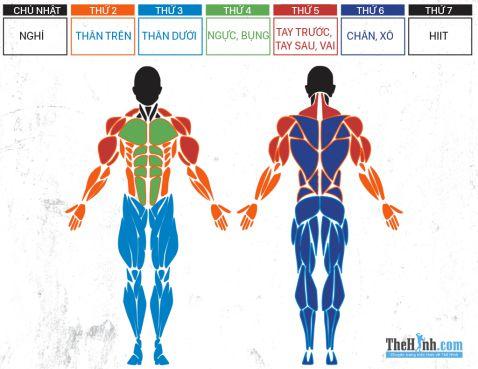 Lịch tập siết cơ giảm mỡ cho nam trong 6 tuần cơ bản
