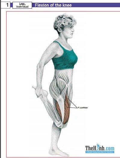 [Ebook] 100 bài giãn cơ sau khi tập cho mọi nhóm cơ để phục hồi nhanh nhanh hơn