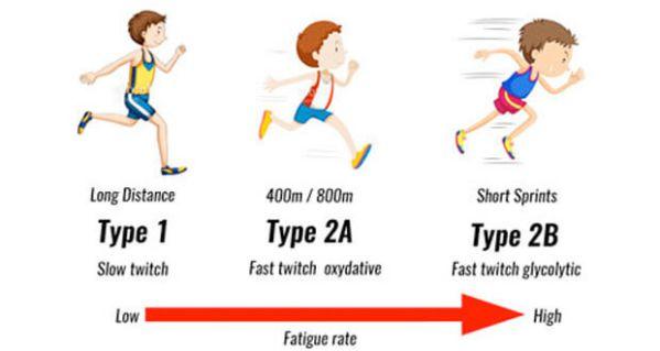 Tăng cơ là gì ? Lý thuyết căn bản về tăng cơ giảm mỡ cho Gymer mới