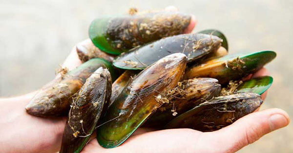 Green Lipped Mussel Oil