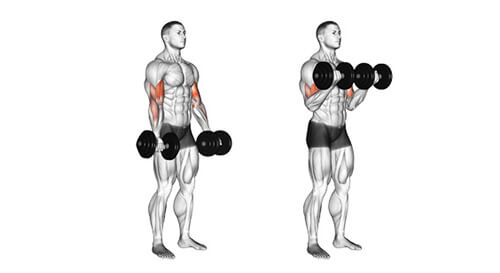 Standing Dumbbell Bicep Curl