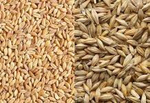 Giảm cân hiệu quả và an toàn nhờ 5 loại ngũ cốc nguyên hạt