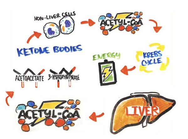 Ketogenic Diet - Mọi thứ về chế độ ăn kiêng Keto giảm cân