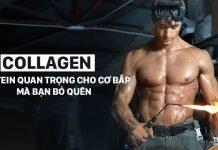 Collagen là gì - Nguồn protein quan trọng của cơ bắp mà bạn bỏ quên