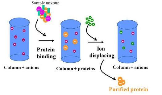 So sánh các công nghệ sản xuất whey protein hiện nay