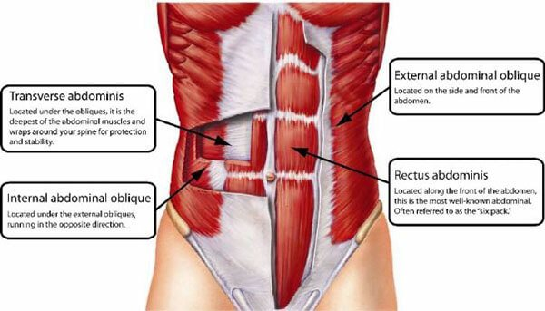 Cấu tạo cơ bụng của bạn