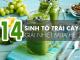 14 công thức sinh tố trái cây hỗn hợp tươi mát bạn nên thử trong mùa hè này
