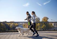 Những giống chó thích hợp cho việc chạy bộ nhất