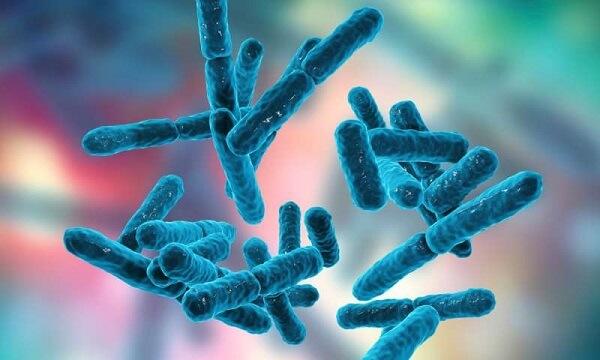 Tại sao nên dùng và cách dùng Probiotic?