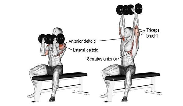 Bài tập vai Arnold Press