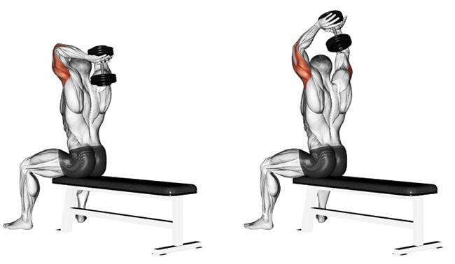 Bài tập tay sau Dumbbell Overhead Triceps Extension